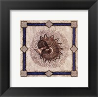 Framed Mollusk Shell I