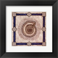 Solarium Shell Framed Print