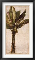 Tropic Banana I Framed Print