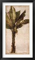 Tropic Banana I Framed Print
