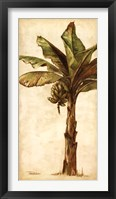 Tropic Banana II Framed Print