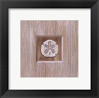 Beadboard Sanddollar Framed Print