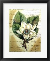 Framed Magnolia Sur La Francais II