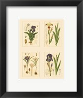 Framed Miniature Botanicals I