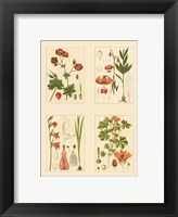 Framed Miniature Botanicals II