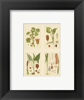 Framed Miniature Botanicals IV