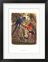 Framed Tropical Birds III