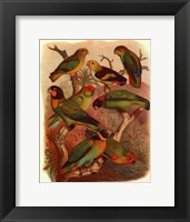Framed Tropical Birds IV