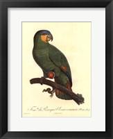 Framed Parrot, PL 110