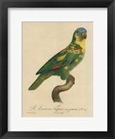 Framed Parrot, PL 89