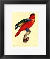 Framed Parrot, PL 95