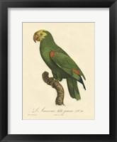 Parrot, PL 86 Framed Print