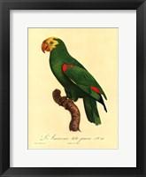 Framed Parrot, PL 86