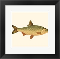 Framed Small Antique Fish VI