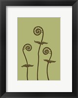 Dichromatic Fiddleheads III Framed Print