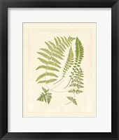 Ferns with Platemark II Framed Print