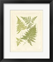 Ferns with Platemark VI Framed Print