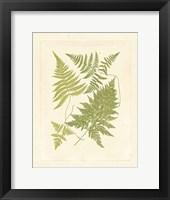 Framed Ferns with Platemark VI