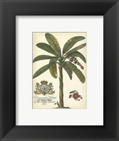 Framed Palm and Crest II