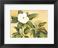 Framed Southern Magnolia II