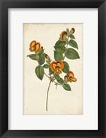 Framed Vibrant Curtis Botanicals II