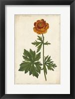 Vibrant Curtis Botanicals V Framed Print