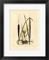 Framed Antique Cattail I