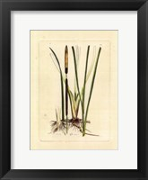 Framed Antique Cattail II