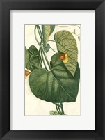 Framed Botanical by Buchoz I (D)