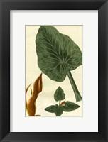 Framed Botanical by Buchoz II (D)