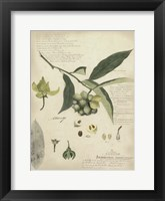 Framed Botanical II