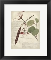 Framed Botanical III