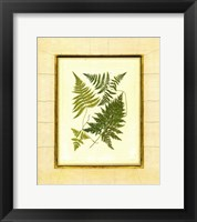 Framed Fern with Crackle Mat  I