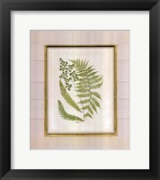 Framed Fern with Crackle Mat (H) II