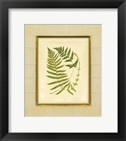 Framed Fern with Crackle Mat (H) III