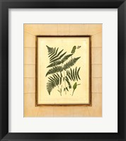 Framed Fern with Crackle Mat (H) IV