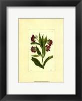 Framed Red Curtis Botanical I