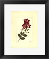 Framed Red Curtis Botanical II