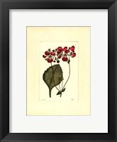 Framed Red Curtis Botanical IV