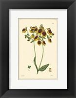 Framed Yellow Curtis Botanical I