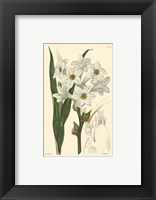 White Curtis Botanical I Framed Print