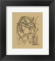 Framed Orchid on Khaki(WG) I