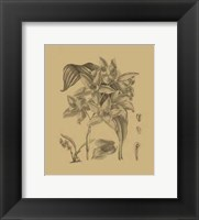 Framed Orchid on Khaki(WG) IV