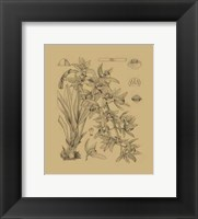 Framed Orchid on Khaki(WG) VII