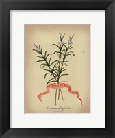 Herb Series III Framed Print
