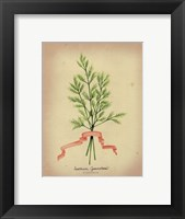 Herb Series V Framed Print