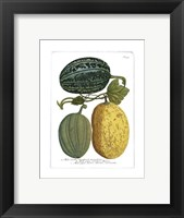 Framed Antique Melons I