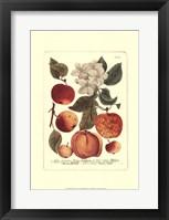 Framed Fruits I