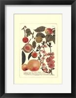 Framed Fruits II