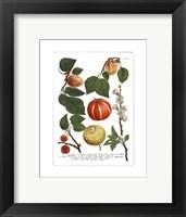 Framed Fruits IV
